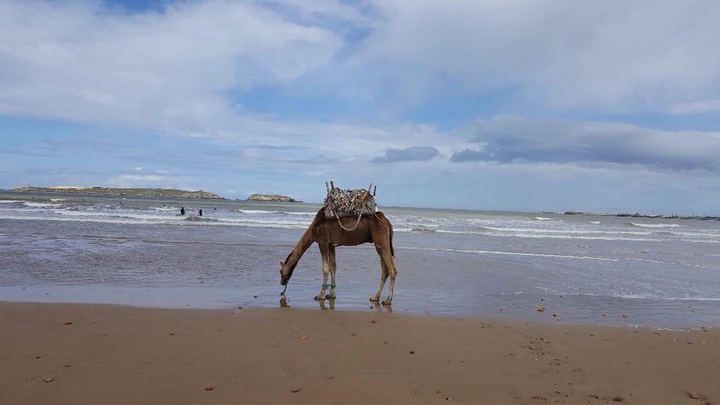 Día 48: Vamos a la playa oh oh Essaouira